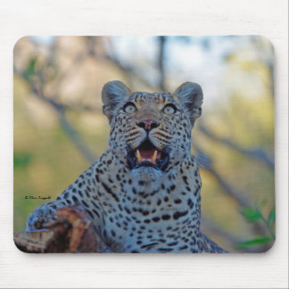 Alert Leopard Mouse Pad