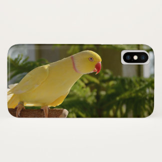 Alert Lutino Indian Ringneck iPhone X Case