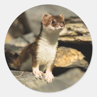 Alert Weasel Classic Round Sticker