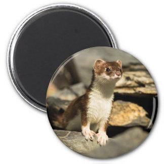 Alert Weasel Magnet