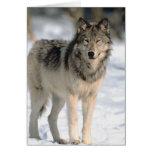Alert Wolf Greeting Card