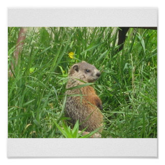 Alerted Groundhog Poster