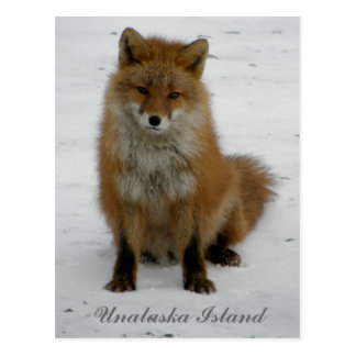 Aleutian Fox in Winter, Unalaska Island Postcard