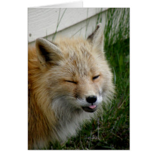 Aleutian Fox With Funny Expression Card