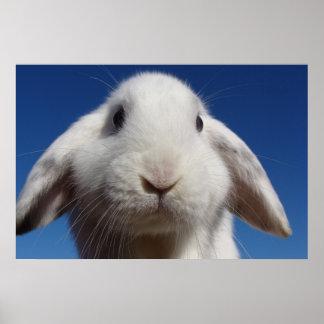 Alice - White Lop Rabbit Poster