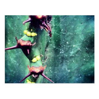 Alien Cactus Postcard