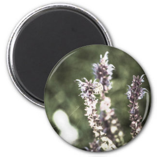 All About Pollen Magnet