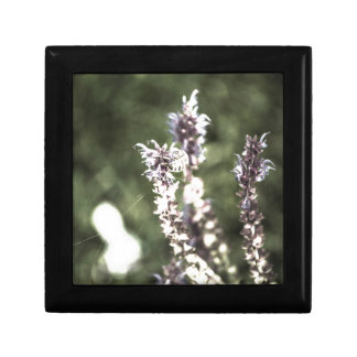 All About Pollen Small Square Gift Box