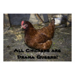 All Chickens are Drama Queens!