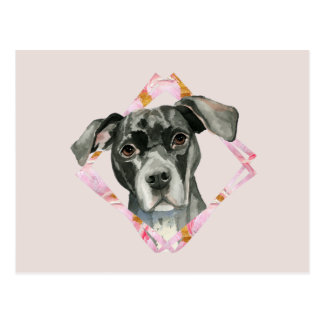 """All Ears"" 2 Pit Bull Dog Watercolor Painting Postcard"