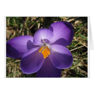All Occasion. blank, purple crocus, greeting card