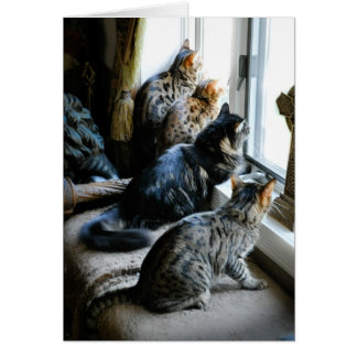 All Occasion Greeting Card - Cats at Window