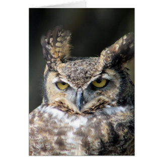 All occasion note cards featuring Great-Horned Owl