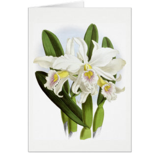 All Occasion White Orchid Greeting Card