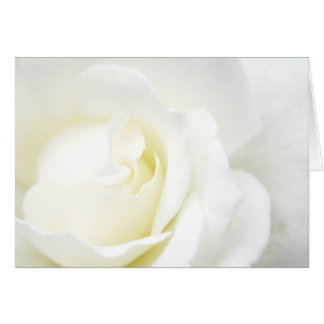 All Occasion White Rose Card