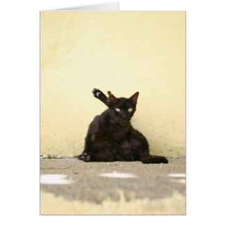 Alley Cat ~ Greeting Card