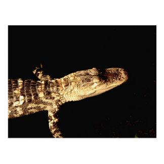 Alligator #1 postcard