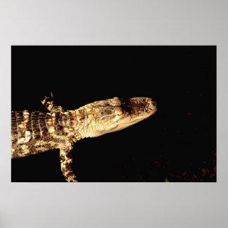 Alligator #1 poster