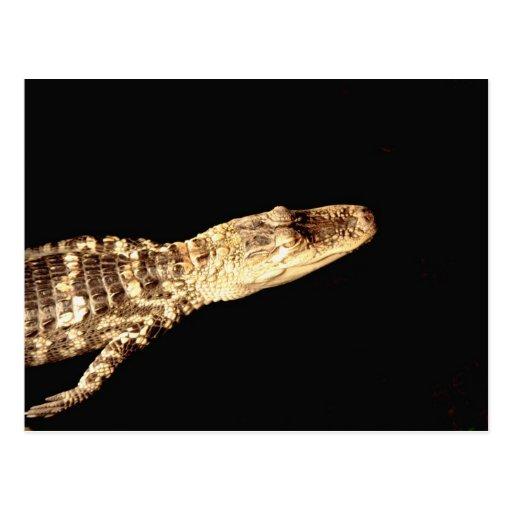 Alligator #2 postcard