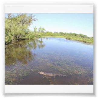 Alligator Alley Photo Print