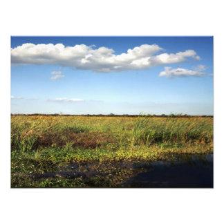 Alligator and Floodplain Orange County Fl Photographic Print