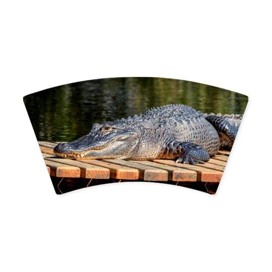 Alligator at Homosassa Springs Wildlife State Park