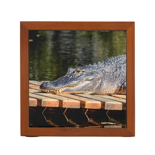 Alligator at Homosassa Springs Wildlife State Park Desk Organisers