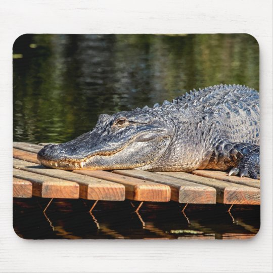 Alligator at Homosassa Springs Wildlife State Park Mouse Pad