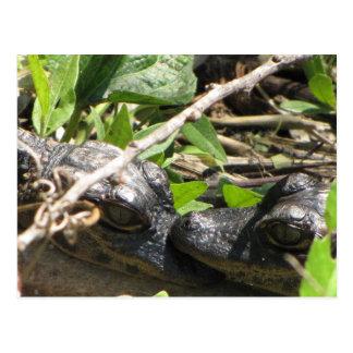 Alligator Babies postcard