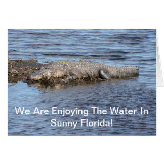 Alligator Gator Card