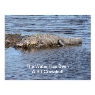 Alligator Gator Postcard