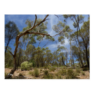 Alligator Gorge, South Australia Postcard