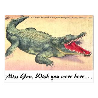 Alligator in Florida Postcard