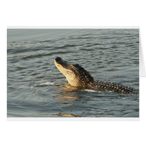 Alligator in the water. greeting card