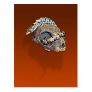 Alligator Lizard on a Cat Skull Postcard