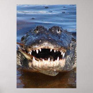 Alligator Mississipiensis Poster
