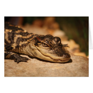 Alligator Notecard Greeting Cards