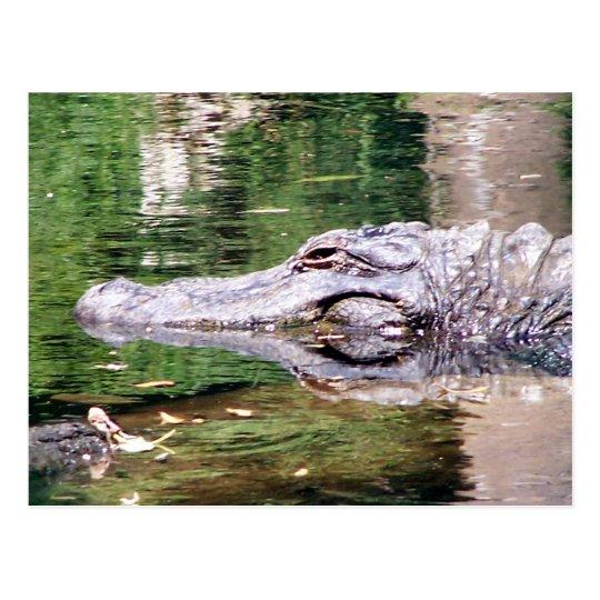 Alligator on the Move Postcard