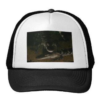 Alligator picture on Hat