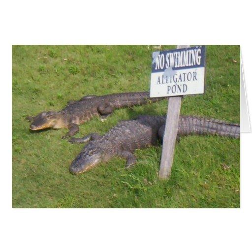 Alligator Pond Cards