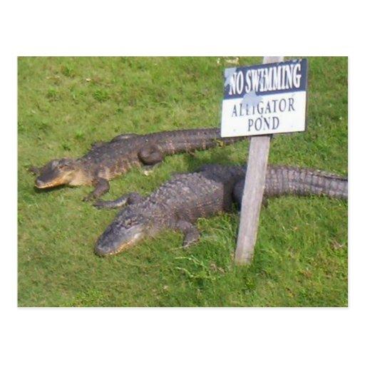 Alligator Pond Post Card