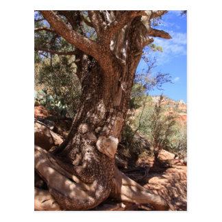 Alligator Tree Postcard