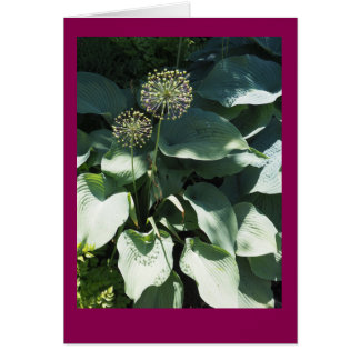 Allium and Hosta Leaves Blank Note Card