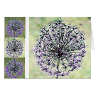 Allium Card