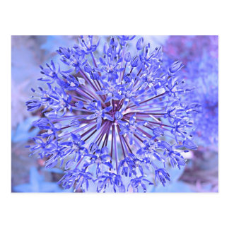Allium Flower In Blue Postcard