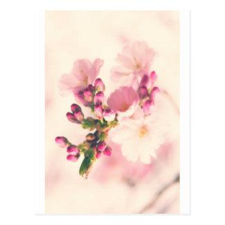 Almond blooms kind postcard