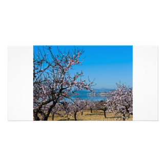 Almond Blossom 3 Photo Card