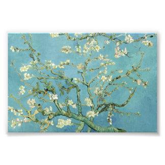 Almond Blossom by Van Gogh Fine Art Photo Prints