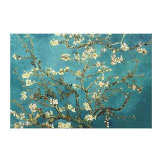 Almond Blossom Canvas