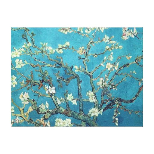 Almond Blossoms Gallery Wrapped Canvas